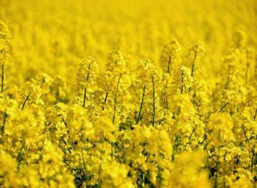 Tests OGM au point : l'UE n'a plus d'excuse pour contourner sa loi
